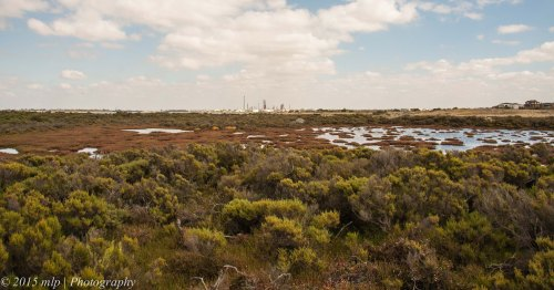 Jawbone Flora and Fauna Reserve, Williamstown, Vic -  looking west towards Altona
