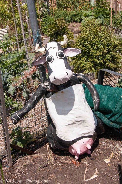 Scare Cow II
