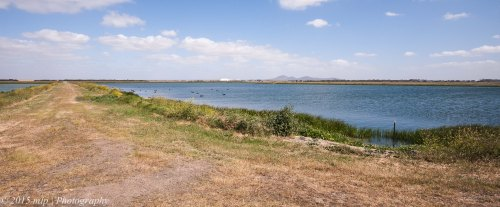 Lagoons within the T section of the Western Treatment Plant - Avalon Airport and the You Yangs in the background