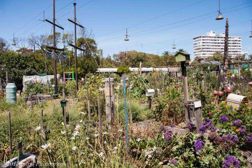 Veg Out Community Gardens II
