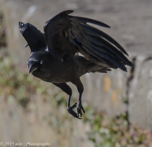 Little Raven, Elster Creek, Elwood