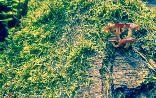 Moss and Mushroom