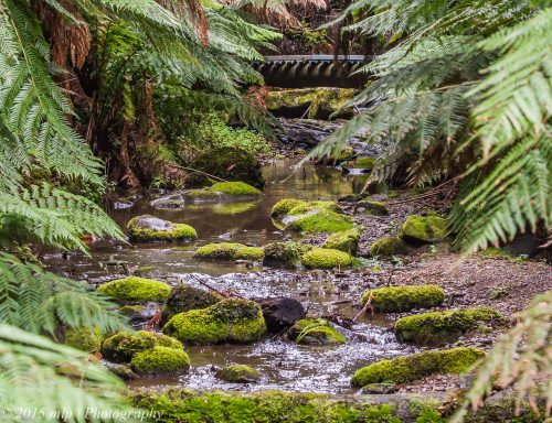 Creek in the rainforest