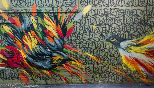 Bird Street Art, ACDC Lane, 9 June 2015