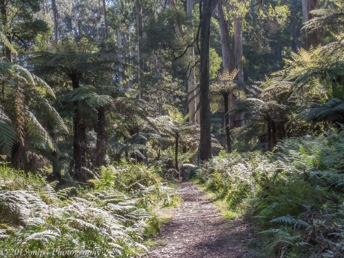 Welch Track, Dandenong Ranges National Park