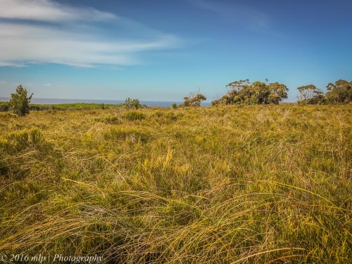 Heathland, Shipwreck Creek, Far East Gippsland