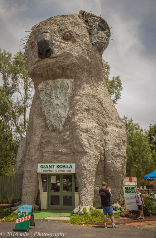 Giant Koala, Dadswells Bridge, Victoria