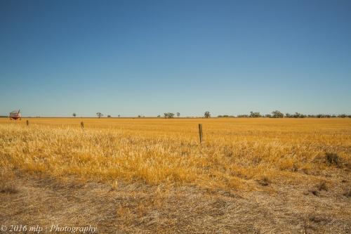 Wheat country Brim, Victoria