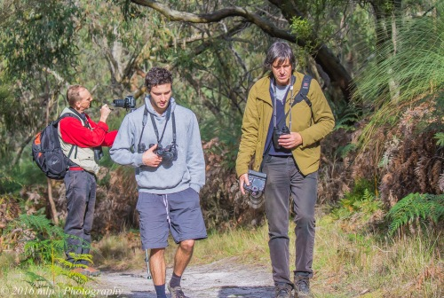 Birders, Greens Bush, Mornington Peninsula, Victoria