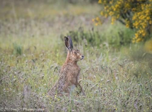 hare-goschen-bushland-reserve-goschen-victoria