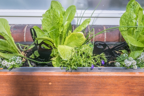 Planter box kitchen garden
