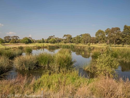 Elster Creek Wetlands, Elsternwick