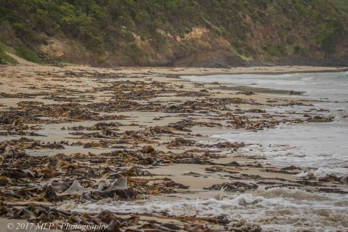 Second Cove, Flinders Ocean Beach, Flinders, Vic