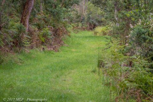 Pardalote nest track, Moorooduc Quarry, Mt Eliza, Vic