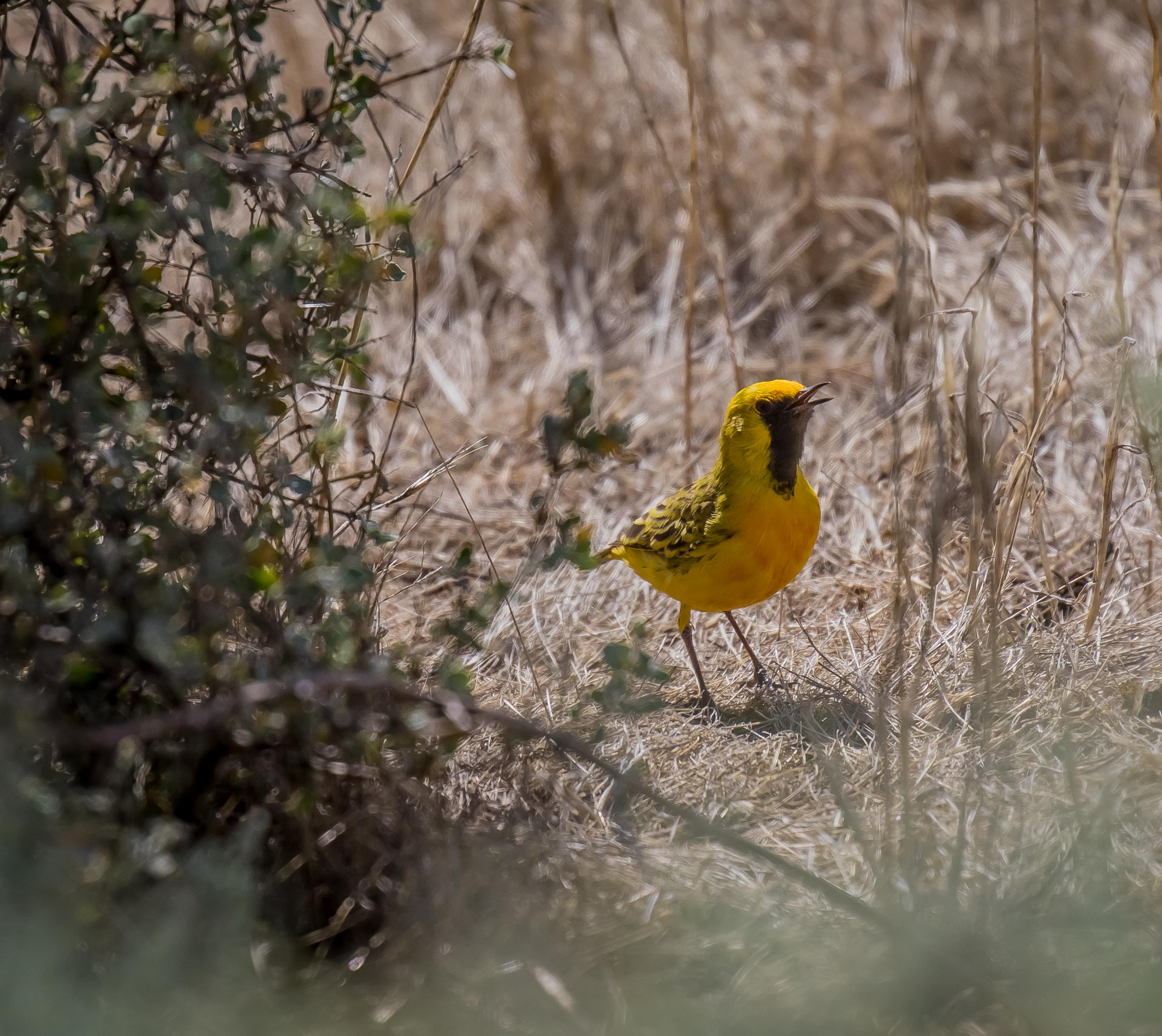 Bird photography the gap year and beyond - Chat orange ...